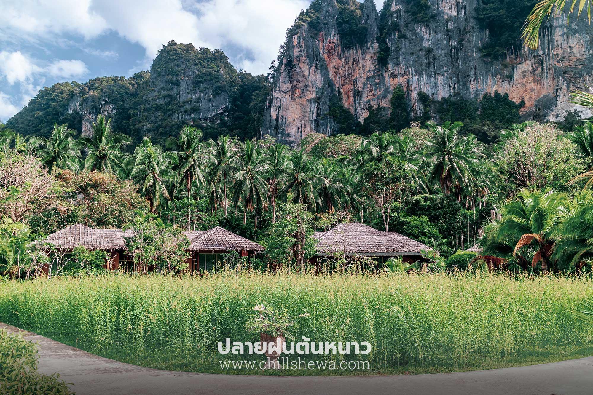 บ้านใสใน รีสอร์ท BAAN SAINAI RESORT  บ้านใสใน รีสอร์ท Ban Sainai Resort อ่าวนาง กระบี่                                                Ban Sainai Resort 13